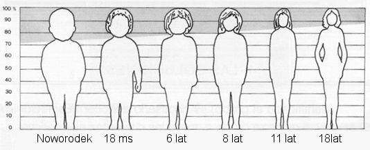proporcje-ciala-2