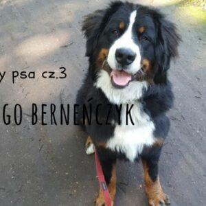 berneńczyk