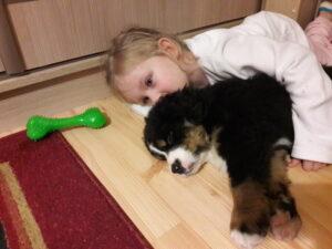 berneński pies i dziecko