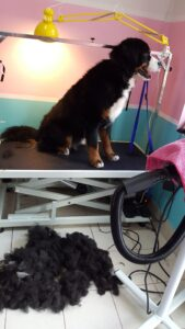 pielęgnacja sierści u psa