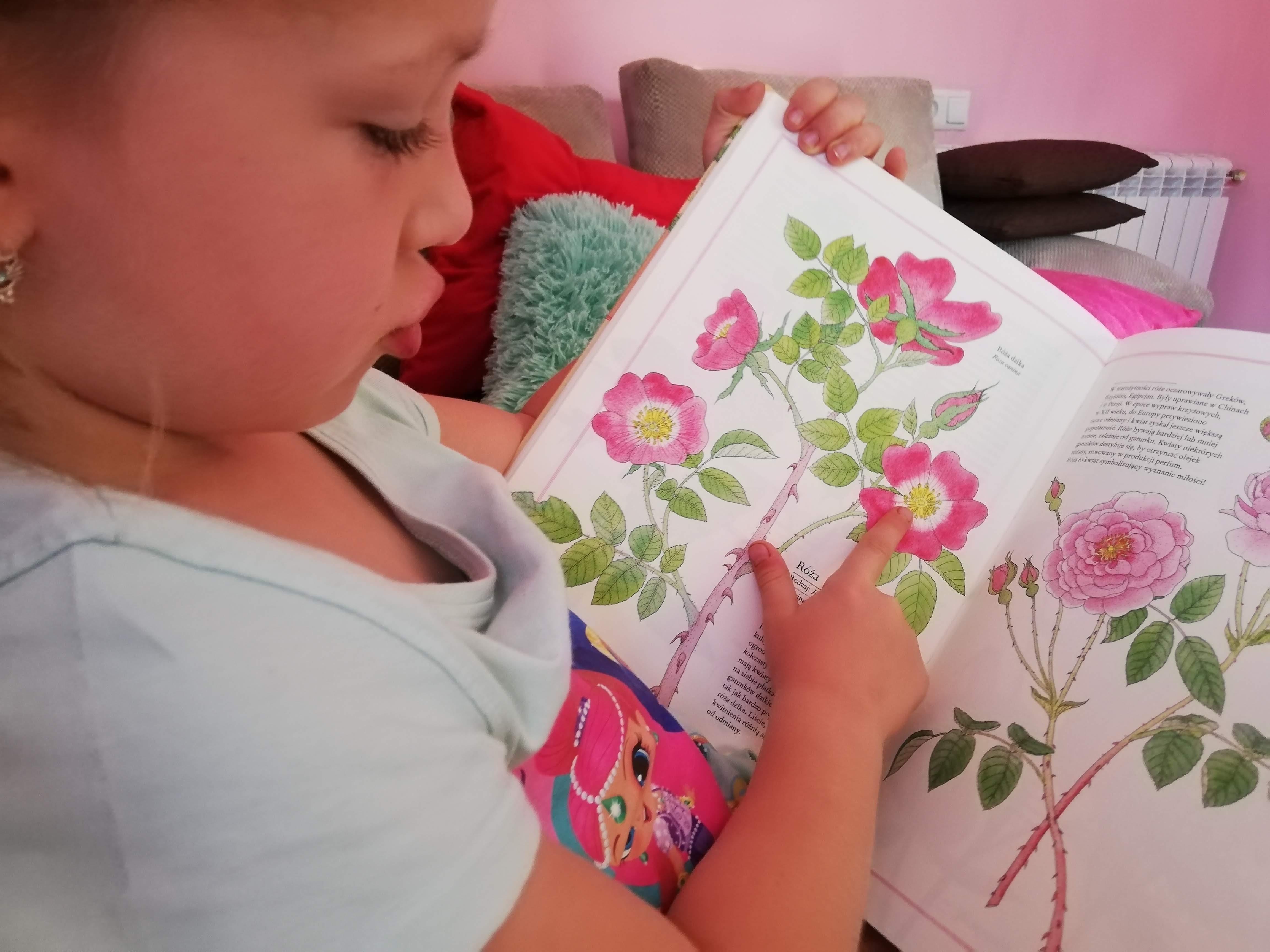 ilustrowany inwentarz kwiatów